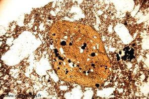 Amphibole brune variété Hornblende (vue au microscope polarisant)