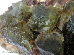 Fluorine verte de la Chaume dans le Morvan (France)