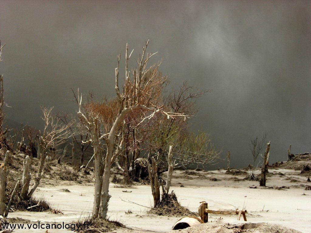 Arbres morts et nuage de cendres à Soufrière Hills de Montserrat (Antilles anglaises)