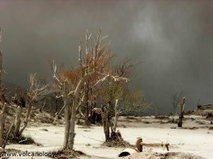 Arbres morts et nuage de cendre à Soufrière Hills de Montserrat