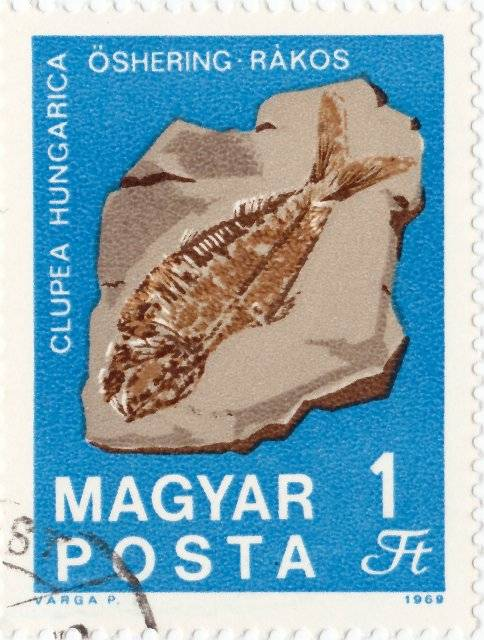 Clupea Hungarica - 1969